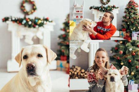 Photo pour Collage de câlins homme et femme touchant les oreilles du labrador à Noël - image libre de droit