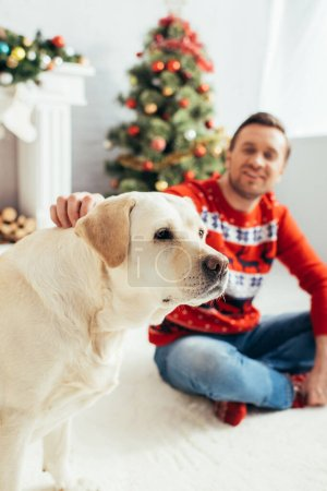 cheerful man in red sweater cuddling labrador near christmas tree on blurred background