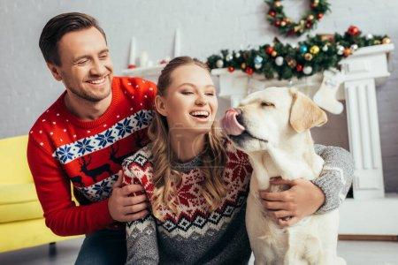 Photo pour Femme heureuse en tricot pull étreignant labrador près du mari dans appartement décoré à Noël - image libre de droit