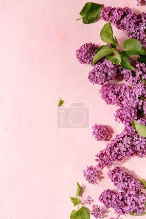 Photo pour Lilas violet printemps fleurs branches sur fond rose pastel. Carte de voeux de vacances ou de mariage. Espace de copie. Fond floral. Image tonique - image libre de droit