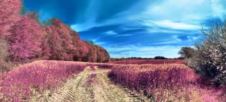 Photo for Beautiful and colorful fantasy landscape in an asian purple infrared photo style - Royalty Free Image