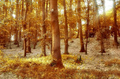 Beautiful golden october forest with brown and yellow leaves