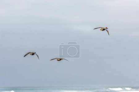 Photo for Black birds flying over dark water surface - Royalty Free Image