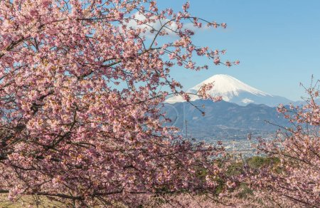 Kawazu Sakura and Mountain Fuji in spring season