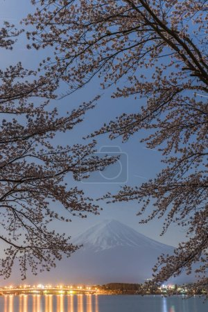 Night view of Sakura cherry blossom and Mount Fuji  at Kawaguchiko lake in spring season, Japan