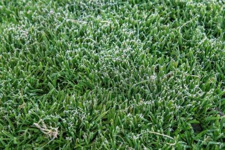 Photo pour Le premier gel au sol couvrait les feuilles fraîches d'ortie verte tôt le matin d'automne. Acte saisonnier de la nature. Début de saison froide. Prévisions météorologiques. Feuillage naturel automne fond - image libre de droit