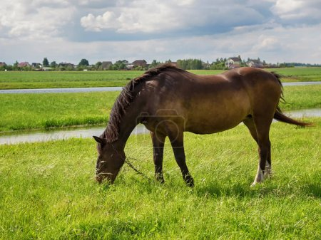 A brown horse one grazes on a meadow near a farm on a sky background