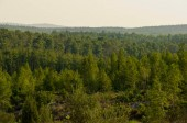 View of the forest in Israel. Beit Shemesh.