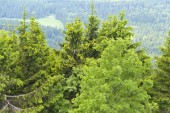 Thuringian Forest with green trees
