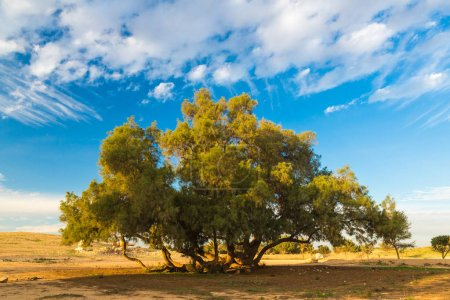 Photo for Tree against the blue sky spring day - Royalty Free Image