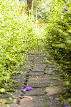 Photo for The walkway in garden on nature background. - Royalty Free Image