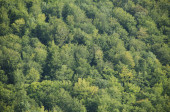 Deciduous beech forest canopy as seen from above in summer in Germany