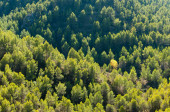 Full frame take of  a forested hilly landscape