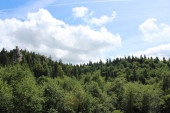 nice landscape with forest in Carpathian mountains