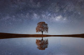 Milky Way over a lonely single tree
