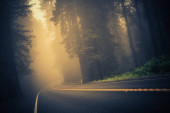 Foggy Forest Road. Redwood Highway, California, United States.
