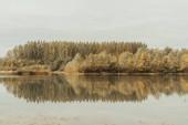 """Постер, картина, фотообои """"красивый пейзаж с соснами и кустов отражено в спокойной воде в пасмурный осенний день"""""""