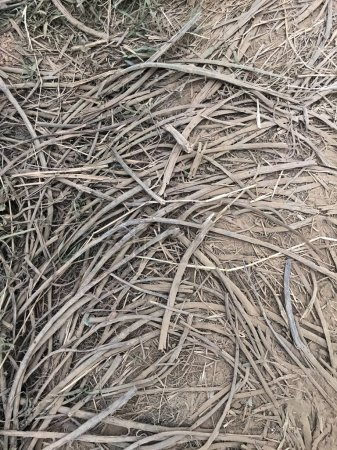 Photo for Dry grass in the field - Royalty Free Image