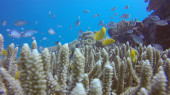 coral reefs in the sea