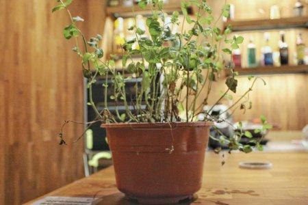 Photo pour Belle grenaille botanique, papier peint naturel - image libre de droit
