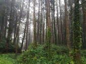 flora and nature, environment leaves in forest