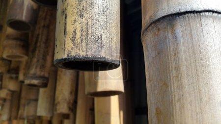 Du bambou. Des tiges de bambou. Tiges sèches de bambou