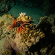 Lionfish on background of coral reef...