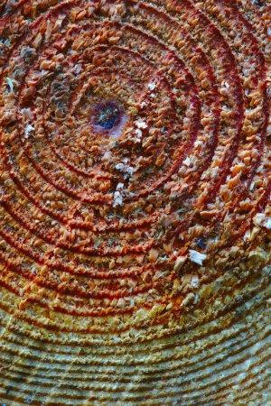 Photo pour Texture du bois, des cercles concentriques d'une coupe d'arbres tronc, gros plan - image libre de droit