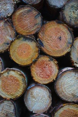 Photo pour Bûches de bois empilés, vue de face en gros plan - image libre de droit
