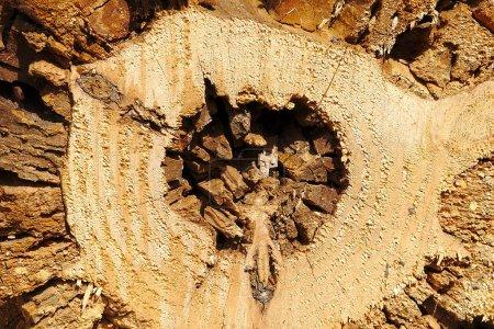 Photo pour Raw logs texture. material, background. - image libre de droit