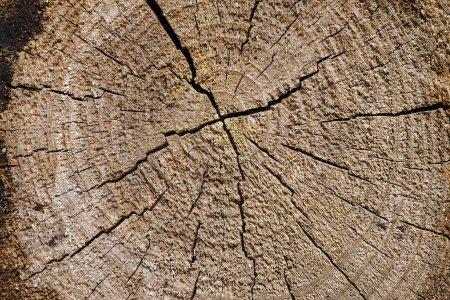 Photo pour Texture des billes brutes. matériel, contexte . - image libre de droit