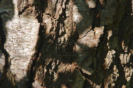 Photo pour Texture d'écorce sèche de plan rapproché, photographie macro - image libre de droit
