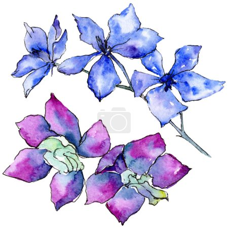 Purple and blue orchid flowers isolated on white. Watercolor background illustration. Hand drawn aquarelle flowers.