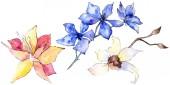 """Постер, картина, фотообои """"Фиолетовые, желтые и белые цветки орхидеи изолирован на белом. Акварель фон иллюстрации. Рука акварель Рисованные цветы."""""""