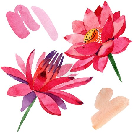Red lotus flowers. Isolated illustration element. Watercolor background illustration. Hand drawn in aquarell.