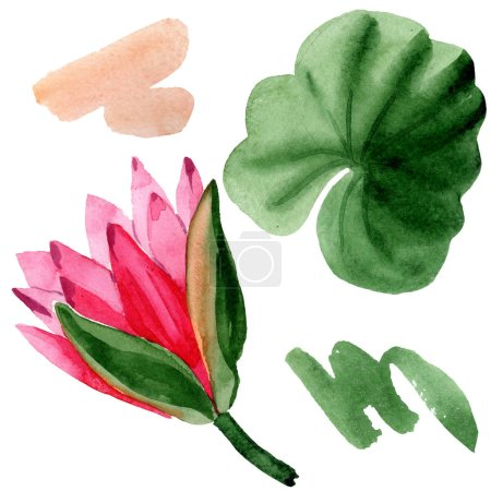 Red lotus flower with green leaf isolated on white. Floral botanical flower. Watercolor background illustration.