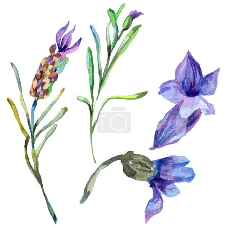 Fleurs de lavande violette. Fleurs de printemps sauvage isolés sur blanc. Main tiré des fleurs de lavande en aquarelle. Illustration de fond aquarelle