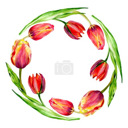 Amazing red tulip flowers with green leaves. Hand drawn botanical flowers. Watercolor background illustration. Frame border ornament wreath.