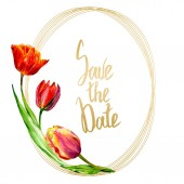 Amazing red tulip flowers with green leaves. Save the date handwriting monogram calligraphy. Watercolor background illustration. Frame border ornament round.