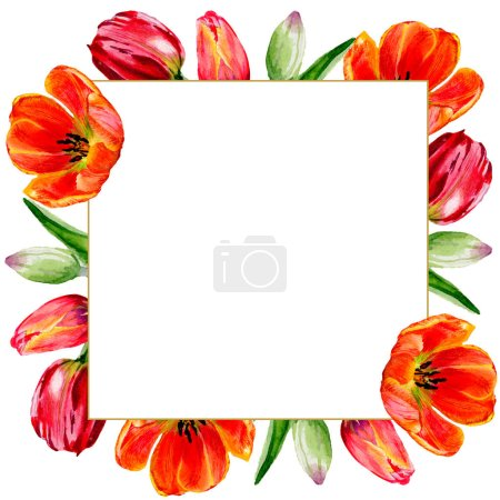 Amazing red tulip flowers with green leaves. Hand drawn botanical flowers. Watercolor background illustration. Frame border ornament square.