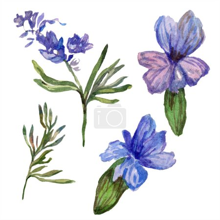 Purple lavender flowers. Wild spring wildflowers isolated on white. Hand drawn lavender flowers in aquarelle. Watercolor background illustration.
