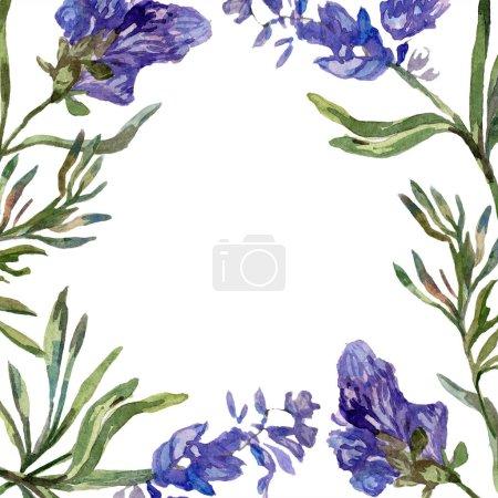 Purple lavender flowers. Wild spring flowers. Watercolor background illustration. Frame border square.