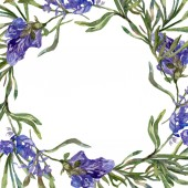 Purple lavender flowers. Spring wildflowers. Watercolor background illustration. Wreath frame border.