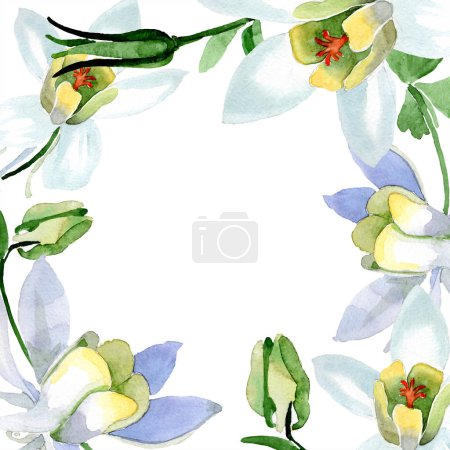 White aquilegia flowers. Frame border round ornament. Watercolor background illustration. Beautiful aquilegia flowers drawing in aquarelle style.
