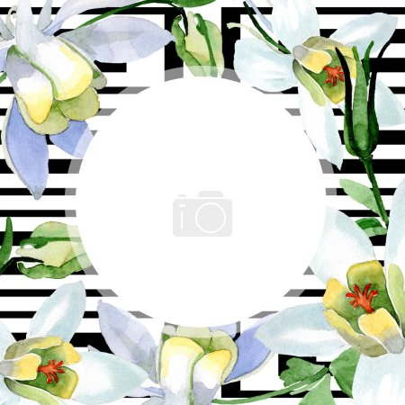 White aquilegia flowers. Frame ornament round. Watercolor background illustration. Beautiful aquilegia flowers drawing in aquarelle style.