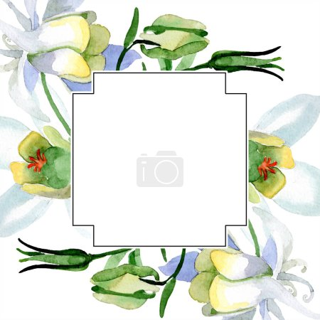 Photo for White aquilegia flowers. Frame border ornament square. Watercolor background illustration. Beautiful aquilegia flowers drawing in aquarelle style. - Royalty Free Image