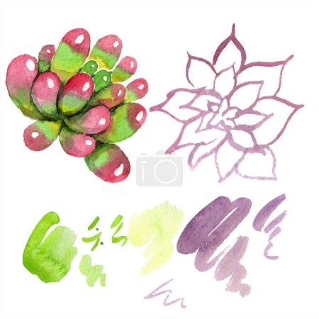 Amazing succulents. Watercolor background illustration. Aquarelle hand drawing isolated succulent plants and stains.