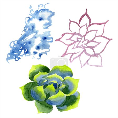 Amazing succulents. Watercolor background illustration. Aquarelle hand drawing isolated succulent plants and spot.