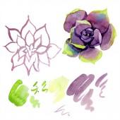 """Постер, картина, фотообои """"Удивительные суккулентов. Акварель фон иллюстрации. Акварель руку Рисование изолированных суккулентных растений и пятна"""""""