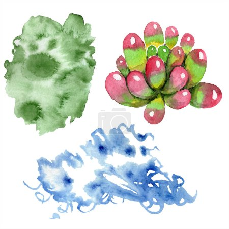 Amazing succulent. Watercolor background illustration. Aquarelle hand drawing isolated succulent and spots.
